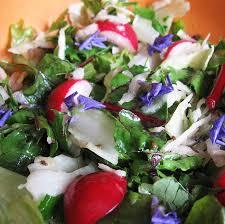 comment cuisiner les feuilles de betterave recette diététique salade de betteraves rouges radis chou