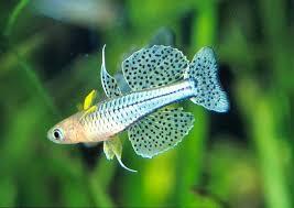 aquarium poisson prix poissons exotiques vente magasin uniquement nano aquarium