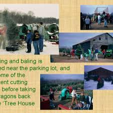 Wadsworth Christmas Tree Farm by About Galehouse Tree Farm