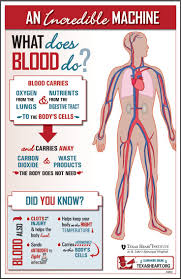 This Is A Simple And Visually Attractive Picture That Will Gets Students To Start Thinking About Blood What Does Do Fun Facts
