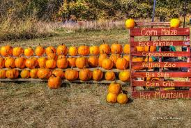 Griffin Farms Pumpkin Patch by Mecca Family Farms U0027 Pumpkin Patch Our Eyes Upon Missouri