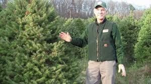 Balsam Christmas Tree Care by Video Tip Christmas Tree Care Youtube