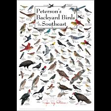 Peterson's Backyard Birds Of The Southeast – Poster – Earth Sky + ... Sibleys Backyard Birds Wings And Feathers Pinterest Bird Grow These Native Plants So Your Can Feast Audubon Winter Feeding Tips For Happy And Healthy Pics Florida Wild Co Watching De My Life In A Northern Town Cedar Waxwing Birds Utah Google Search Weve Seen The Butterflies Butterflies Of New England Yok David Feeding At My Father Nature Bird Feeder Jacksonville Serenity Spell Attracting Creating Habitat For Wildlife Barn