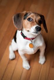 Dog Urine Odor Hardwood Floors by Q A Reliable Floor Coverings