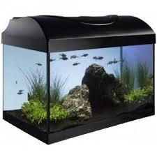 acheter un aquarium comment choisir jardingue