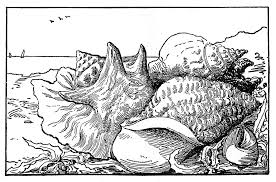 Ocean Coloring Pages Cute For Adults