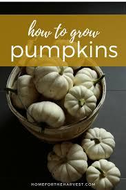 Organic Pumpkin Seeds Bulk by How To Grow Organic Pumpkins