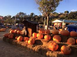 Pinery Bonita Pumpkin Patch by Pumpkin Station Inicio Facebook