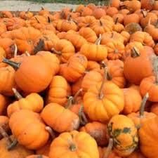 Pumpkin Patch Sf Yelp by Tweite U0027s Pumpkin Patch Pumpkin Patches 1821 Frontier Rd Sw