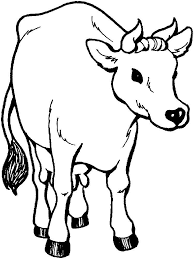 Animals Cow Coloring Pages 5