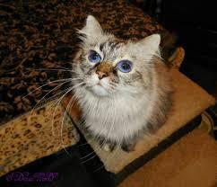 service cats service cats raena calls for help deziz world