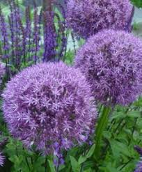 we provides high quality flower bulbs which can easily bloom