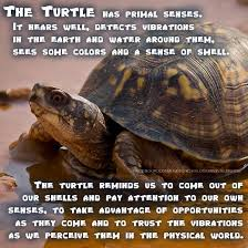 Turtle Shell Not Shedding Properly by Shell Rot In Turtles Tortoises My Turtle Tortoise Care Posters