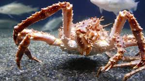 Wizard Deadliest Catch Sinks by Alaskan King Crab Fisherman Risk Lives To Chase A Deadliest Catch