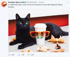 Krusteaz Pumpkin Spice Pancakes by You Had Me At Pumpkin Spice Latte It U0027s Psl Season Porch