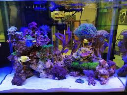 Aquascapes | Exotic Reef Designs Is This Aquascape Ok Aquarium Advice Forum Community Reefcleaners Rock Aquascaping Contest Live Rocks In Your Saltwater Post Your Modern Aquascape Reef Central Online There A Science To Live Rock Sanctuary 90 Gallon Build Update 9 Youtube Page 3 The Tank Show Skills 16 How Care What Makes Great Large Custom Living Coral Aquariums Nyc