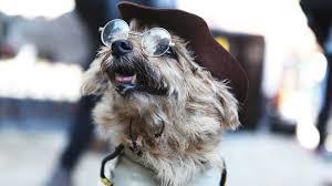Tompkins Square Halloween Dog Parade by The Tompkins Square Halloween Dog Parade Top Dog Costumes Today Com