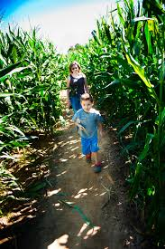 Marana Pumpkin Patch Field Trip by Get Lost In These 9 Awesome Corn Mazes In Arizona This Fall