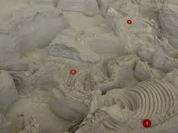 Ashfall Fossil Beds State Historical Park by Fossils Picture Of Ashfall Fossil Beds State Historical Park
