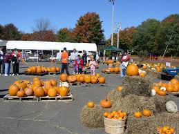 Pumpkin Picking Ct Best by St Anthony U0027s Pumpkin Patch Prospect Ct Now Open