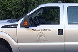 City Reveals Details Of New Animal Control Plan | Renton Reporter Built Animal Control Trucks For Two Different Counties There May Visalia Police Search Suspect Who Stole City Animal Control Truck Bodies Trivan Body 2011 Dodge Ram 2500hd Crew Cab Pickup Truck City Of Bozeman Law Enforcement On Chevy Colorado 4x4 By New Icon Isometric 3d Style Royalty Free Cliparts Marion County Services Bb Graphics The Wrap Cordele Georgia Crisp Watermelon Restaurant Attorney Bank Hospital Diecast Hobbist 1976 B100 Van Removes Dogs Rats And Snakes From Smithfield Home Wjar