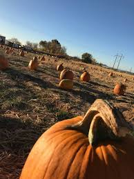 Where Did Pumpkin Patch Originate by Robinson Family Pumpkin Patch Home Facebook