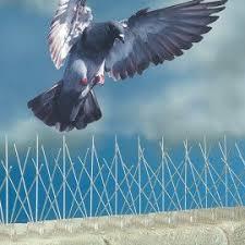bird by industry roofing industry bird b