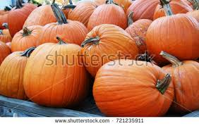 Pumpkin Patch Tallahassee by Pile Of Pumpkin