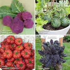 gemüsesamen attractive vegetable easy to grow finest