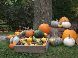 Best Pumpkin Patches In Cincinnati by 100 Pumpkin Patch Near Cincinnati Oh Columbus And Central