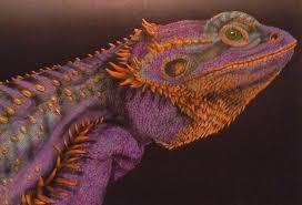 Coloring Books Bearded Dragon By Pauline Wyatt