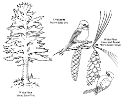 Maine State Seal Chickadee And White Pine Tree