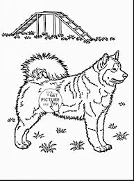 Realistic Husky Coloring Pages Free Of 0d