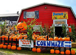 Pumpkin Picking Places In South Jersey by Best Pumpkin Patches And Corn Mazes For Seattle And Eastside