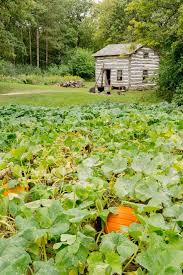 Southeast Wisconsin Pumpkin Patches by Polly U0027s Pumpkin Patch Chilton Wisconsin Discovering This Side