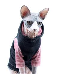cat hoodies sphynx clothes cat hoodie denim sleeved with by simplysphynx
