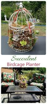 1378 Best Gardening On A Budget Images Pinterest