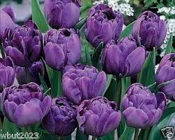 274 best tulips 3 images on tulips and furniture