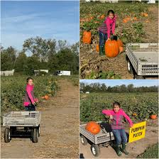 Pumpkin Patch Cincinnati by Garver Family Farm Market U2013 Cincinnati Parent Magazine