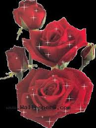 Wallpaper For Mobile Cell Phone Beautiful Red Rose