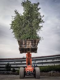 What Kind Of Christmas Tree To Buy by Apple U0027s New Campus An Exclusive Look Inside The Mothership Wired
