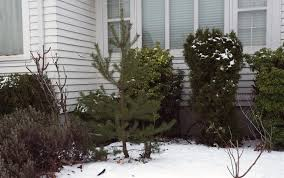 Ascii Art Christmas Tree Small by December 2016 Macbob
