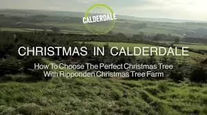 Fresh Christmas Trees Types by Ripponden Christmas Tree Farm 07814 184130 Christmas Trees