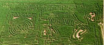 Bishop Pumpkin Farm Hours by How We Create The Maze Treinen Farm Corn Maze U0026 Pumpkin Patch
