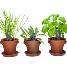 Window Garden Rustic Charm Herb Trio Kit With Planter Pots Slate Markers Fiber Soil