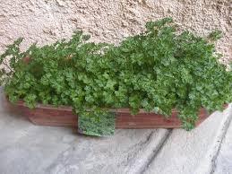 faire pousser des herbes aromatiques sur balcon