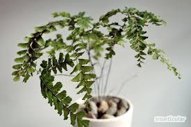 zimmerpflanzen bei wenig licht grüne oasen für dunkle räume