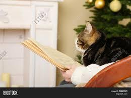 Woman Cute Cat Sitting Image & Photo (Free Trial) | Bigstock