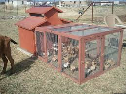 Chickens | MacDonald Farm Chicken Coops For Sale Runs Houses Kits Petco Coops 6 Chickens Compare Prices At Nextag Building A Coop Inside Barn With Large Best 25 Shelter Ideas On Pinterest Bath Dust Little Red Backyard Chickens Barn Images 10 Backyard From Condos Compelete Prevue 465 Rural King Designs Horizon Structures