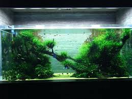 Aquarium Aquascapes – Homedesignpicture.win Home Accsories Astonishing Aquascape Designs With Aquarium Minimalist Aquascaping Archive Page 4 Reef Central Online Aquatic Eden Blog Any Aquascape Ideas For My New 55g 2reef Saltwater And A Moss Experiment Design Timelapse Youtube Gallery Tropical Fish And Appartment Marine Ideas Luxury 31 Upgraded 10g To A 20g Last Night Aquariums Best 25 On Pinterest Cuisine Top About Gallon Tank On Goldfish 160 Best Fish Tank Images Tanks Fishing